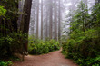 Path through the wood, Redwood National Park, California USA
