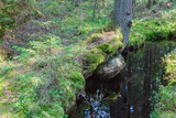 Creek in the the forest with water reflections