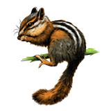 Chipmunk on the branch vector color drawing