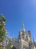 Duomo, Madonnina e fiori, Milano, Lombardia, Italia