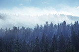 Trees in the fog and clouds. Carpathians. Ukraine. Europe