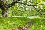 森 散歩道