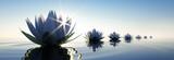 Lotusblüten im Sonnenuntergang 2 - 137602523