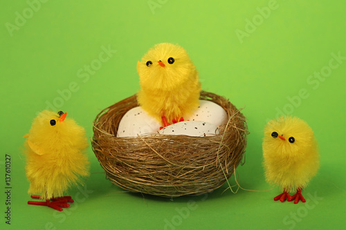 three chick in  nest with three eggs on green background Poster