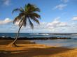 One palm tree on beach