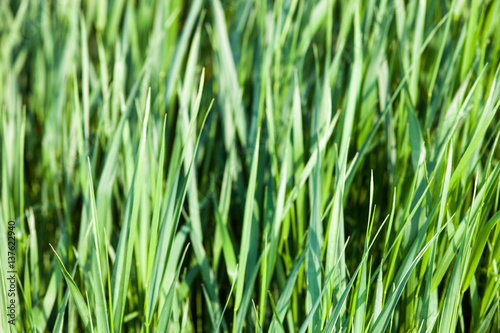 Grünes Gras im Sonnenschein