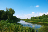 grassy river summer sunny day under the blue sky among green trees and tall grass