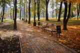Парковая аллея в осеннем городском парке