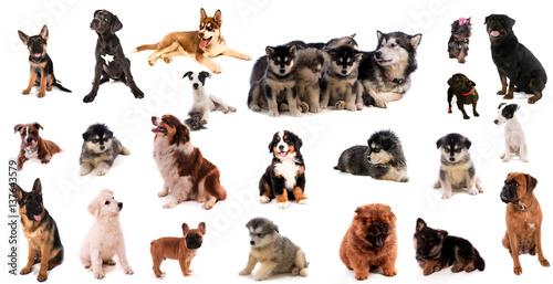Deurstickers Franse bulldog montage canin