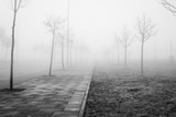 Perspective path made of leafless trees on a foggy winter cold frightening landscape