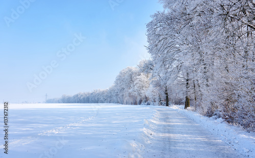 Fototapeta Beautiful winter landscape with white trees and acres and a sunny blue sky