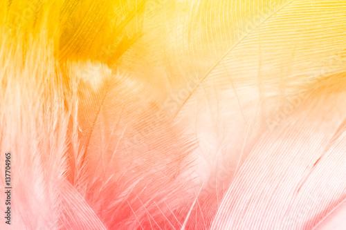 Fototapeta Color trends feather texture background
