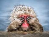 Lustiger Affe versteckt sich