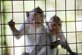 wild cute monkeys at cage