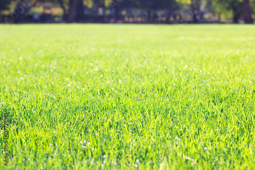 sunny lawn in the park