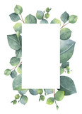 Watercolor green floral card with silver dollar eucalyptus leaves and branches isolated on white background. - 137744997