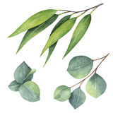 Watercolor hand painted set with eucalyptus leaves and branches. - 137745120