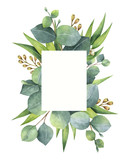 Watercolor green floral card with eucalyptus leaves and branches isolated on white background. - 137745154