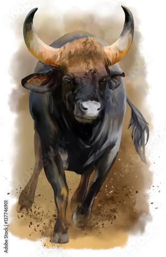 Bull watercolor painting - 137746901