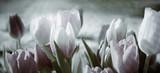 tinted tulips concept © bittedankeschön