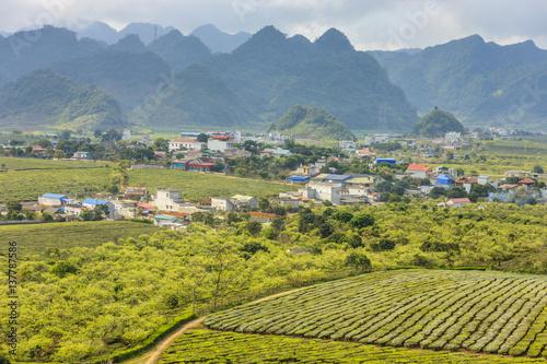 Fotobehang Highland Moc Chau at north Vietnam