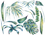 Summer set et of exotic watercolor green leaves - 137857371