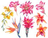 Watercolor set of vintage floral tropical natural elements - 137857515