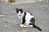 Stray cat on street