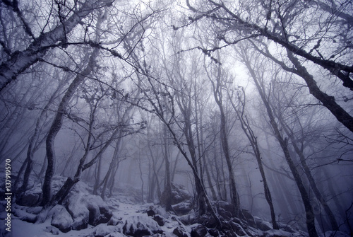 Fotobehang Betoverde Bos Atmospheric mystic bewitched ghostly dark forest covered in snow in a thick fog on early morning, picture taken on a mountain in Crimea, Ukraine.