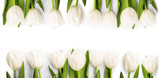 White Tulips with shadow
