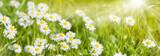 Fototapety Bunte Blumenwiese im Frühling und Sonnenstrahlen