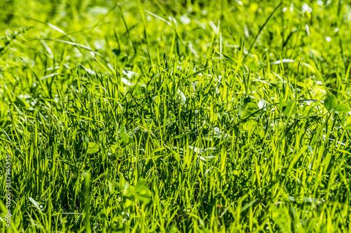 Grüner Rasen, Grashintergrund