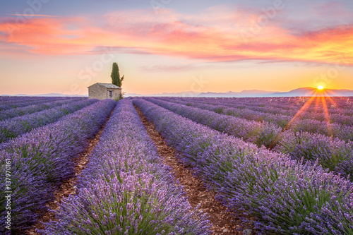 Sunrise in Valensole Poster