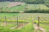 Tuscany vineyard - San Gimignano