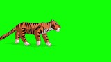 Tiger Walks. Animated Motion Graphic Isolated on Green Screen