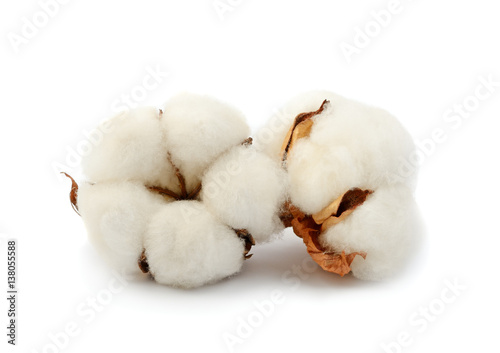 Fotobehang Planten Cotton plant two flowers isolated on the white background