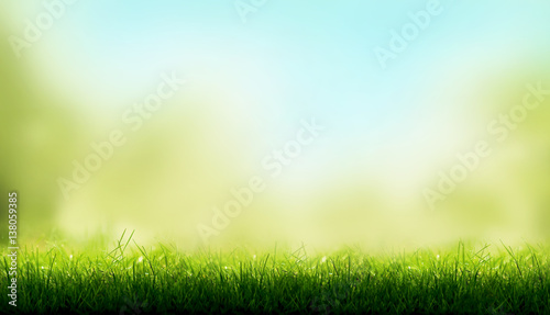 Blades of Green Grass with a blurred sky blue and green garden foliage background.