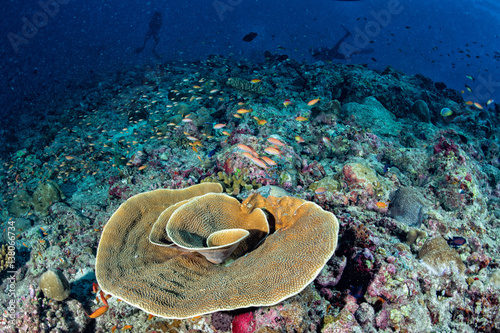 Tuinposter Koraalriffen Maldives hard coral house for Fishes