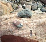 pebble, stones and children