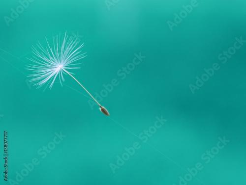Fotobehang Paardenbloemen dandelion parachute