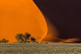 Dune 40 and trees at sunrise, Sossusvlei, Namib Naukluft National Park, Namibia