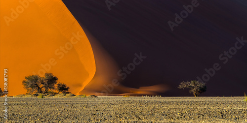 In de dag Oranje eclat Panoramic view of a famous red dune 40 and acacia tree at the foot of it. Sunrise in Sossusvlei, Namib Naukluft National Park, Namibia