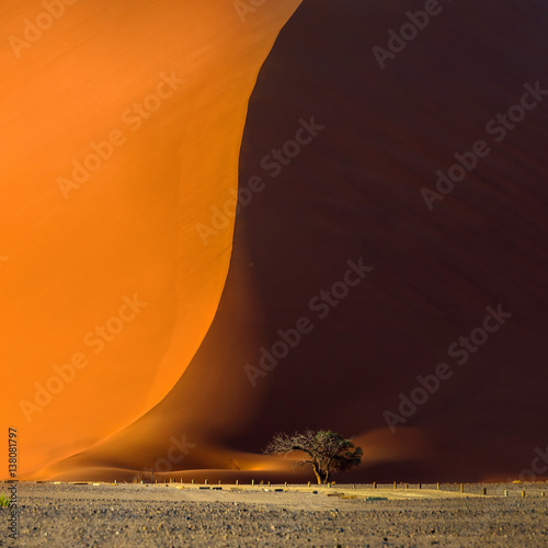 In de dag Oranje eclat Famous red dune 40 and acacia tree at the foot of it. Sunrise in Sossusvlei, Namib Naukluft National Park, Namibia