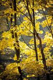 Autumn in park Aleksandriya