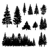 Pine Fir Forest Conifer Coniferous Tree Silhouette - 138112513