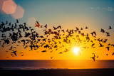 Fototapety Silhouettes flock of seagulls over the Ocean during sunset.