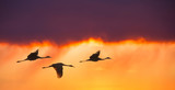 Birds flying against evening sunset panoramic view - 138149120