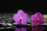 Two Pink orchid on black pebbles