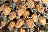 Fresh pineapple background.