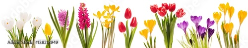 Foto Murales Spring flowers collection